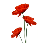 cropped-logo-coquelicot-seul